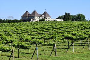 Wissenswertes über Wein in den Vereinigten Staaten