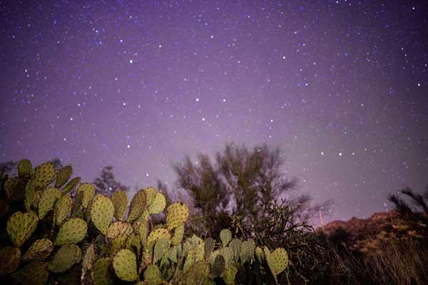 Sonora Wüste