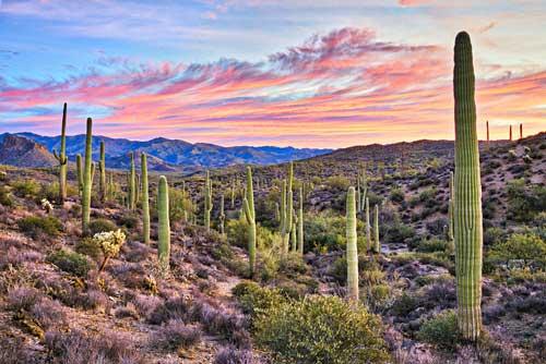 Die Wste bei Phenix Arizona