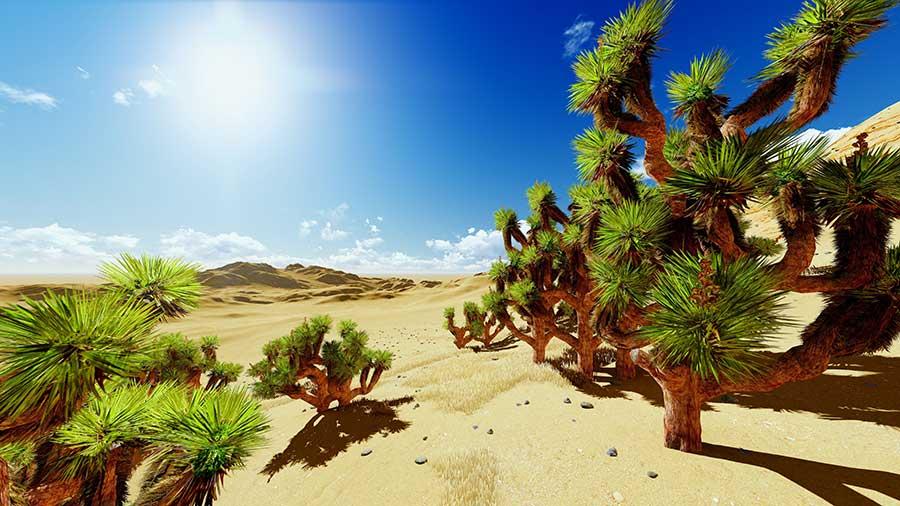 Palm Springs Wüste mit Joshua Bäumen